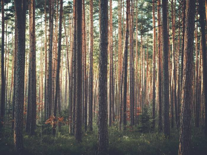 [We offer Forestry Land Services]